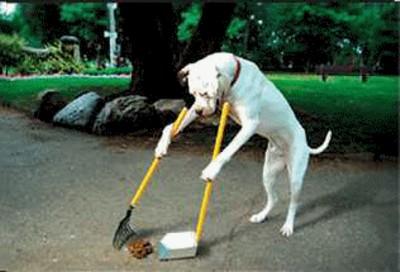 poop-scoop-dog