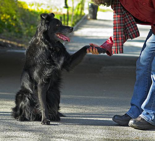 dog-handshake