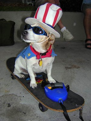 dog-skateboarding-costume