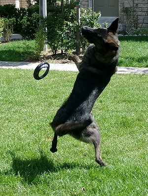 playing-fetch