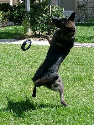 playing-fetch