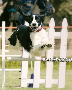 agility-springer-of-the-year