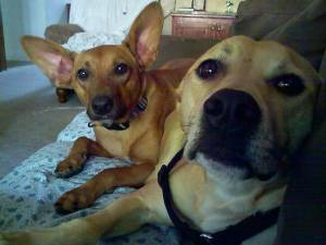 Gizmo & Ginger, Spike, dogs, behavior