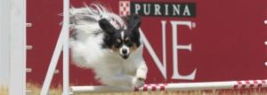 Ask Spike Online, Spike, dog, behavior, Incredible Dog Challenge