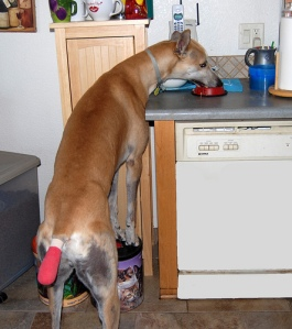 counter-surfing
