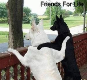 dogs-friends