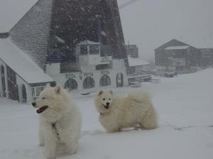 snow-dogs