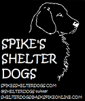 Spike's Shelter Dogs