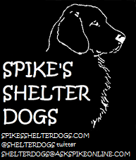 spikes-shelter-dogs-sidebar