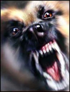 aggressive-dog